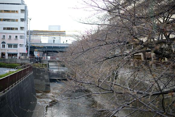 桜。中目黒(目黒川)でお花見。東急東横線「中目黒」駅。