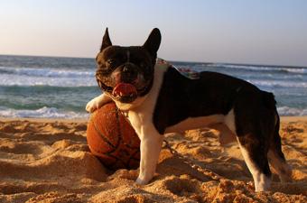 2010年1月、ハワイのビーチで出会った元気な犬