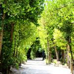 一度は行きたい!沖縄の備瀬・フクギ並木とカフェ・チャハヤブランは感動もの!