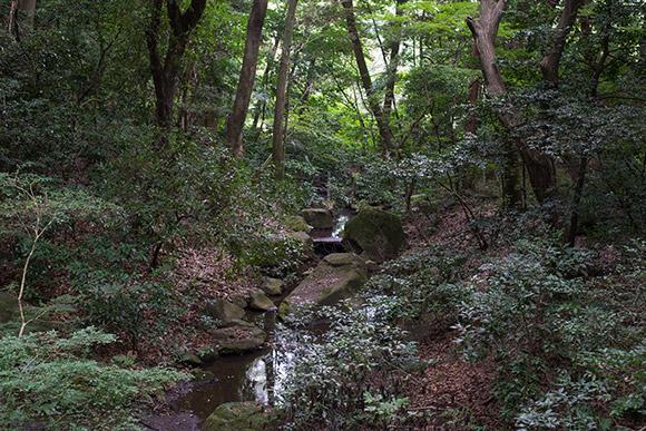 明治神宮は代々木公園に比べて、雑草や水の対策はとくにしているように感じませんでした。