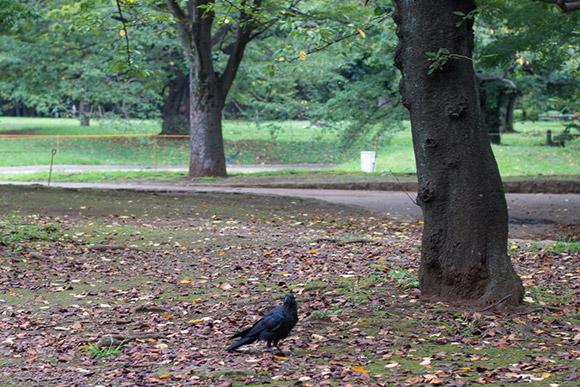 この辺りは鳩ではなく、カラスが沢山います