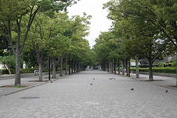 公園通り側から代々木公園へ入る。