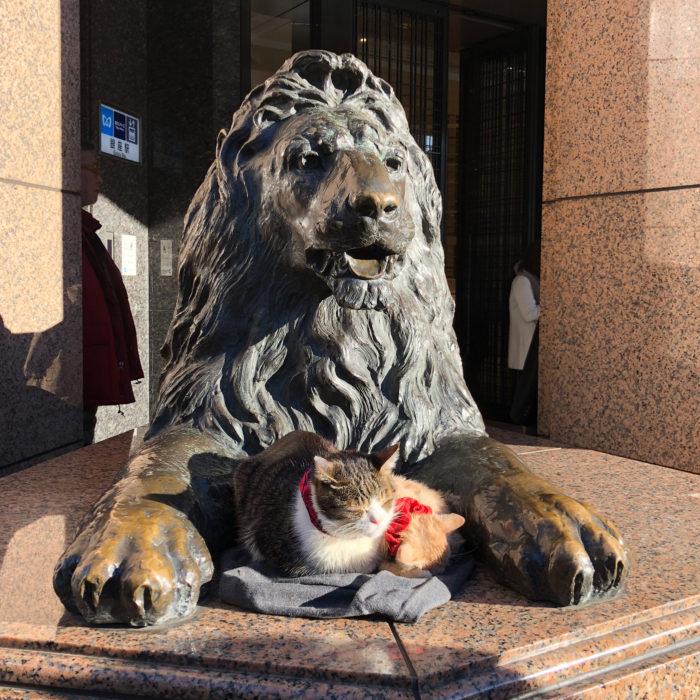 銀座三越前のライオン像に座っている2匹の猫